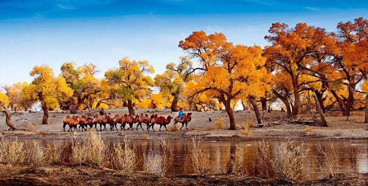 牧民巴依尔的家,在内蒙古阿拉善盟腾格里沙漠的深处。他是四兄弟中的老三,曾在全国各地打过工,最终还是选择回到沙漠,娶妻生子,照顾老父亲。 十多年前,包括巴依尔在内,腾格里的许多牧民都在政府组织下,搬迁到引黄灌渠去种地。因为当时社会普遍认为,沙漠是艰苦恶劣的环境,不适合生存。