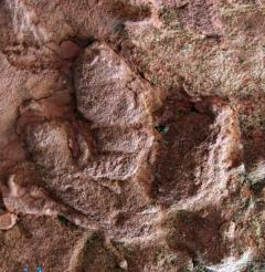 安徽发现重要恐龙足迹:曾被传作张三丰手印