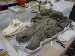 """史前巨鳄:400公斤远古""""炎魔""""以巨龟为食"""