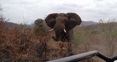 公象被游客自拍惹怒:猛撞吉普车追击500米