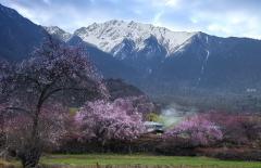 西藏纪——桃花源