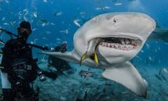 野生动物摄影师近距离拍摄鲨鱼进食画面