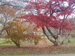 哈佛植物园散记