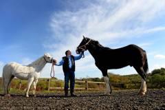 英国最大马匹身高3.6米:一天吃50斤蔬果