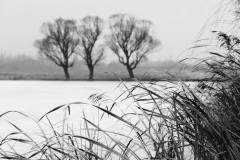 """从""""三棵树""""谈摄影"""