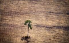 航拍亚马逊雨林采伐活动触目惊心:愈演愈烈