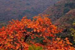 韩城香山红叶美