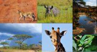 Allen Kijazi:走進坦桑尼亞國家公園