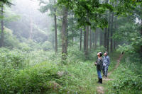 【中國國家地理科考志愿者項目】 走進董寨——發冠卷尾生態行為調查