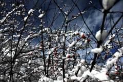 寻秋彩林遇雪景