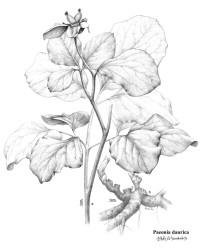 【5月21日講座預告】畫板濃縮自然——植物繪畫并沒那么難!