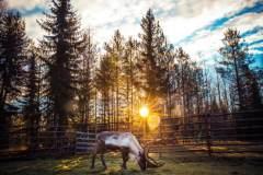 北欧芬兰——邂逅冰雪奇缘