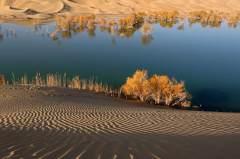 沙漠胡杨光影