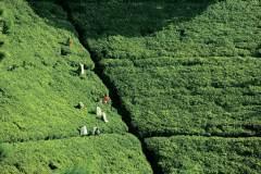 锡兰红茶:穿越时空的爱恋