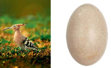 寻找身边的鸟蛋