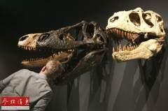 中国恐龙化石种类最多:有大片中生代岩石