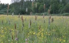 气候变化或加重植物致敏性