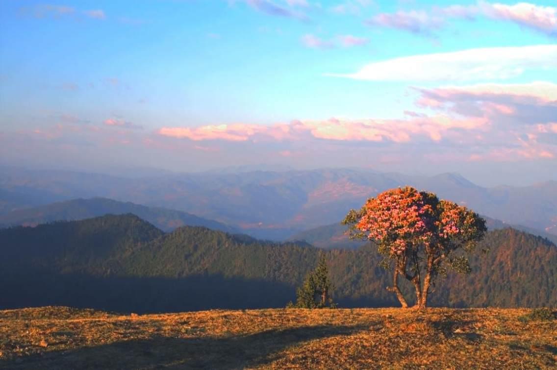 大羊场位于怒江洲兰坪县河西乡,地处三江并流保护核心区。海拔3600米左右,每年六月初漫山遍野的大树杜鹃,花团锦簇。这里也是驴友穿越三江并流保护区的必经之地.