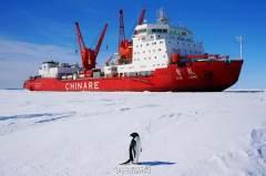 雪龙号科考船在南极卸货引企鹅围观