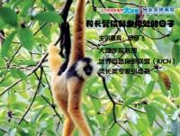 范朋飞:和长臂猿朝夕相处的日子