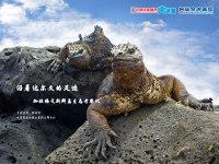【講座變更通知】【7月17日講座預告】:沿著達爾文的足跡 加拉帕戈斯群島生態考察記