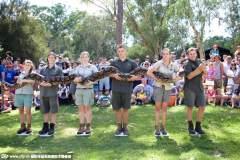 澳258斤蟒蛇体重减轻脾气见长:剧烈反抗称重