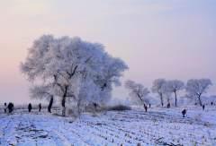 玉树琼花的童话——吉林雾凇