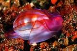 贝壳——海底的星星