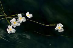 首届中国国家地理自然影像大赛终审作品——野生植物类