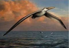 美发现史前最大鸟类化石:巨翼展开超6米