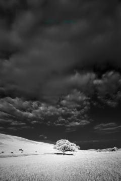 梦里草原——金莲川