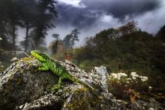 首届中国国家地理自然影像大赛大师奖作品