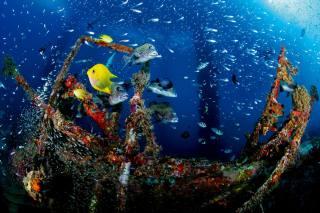 可观赏的人工鱼礁