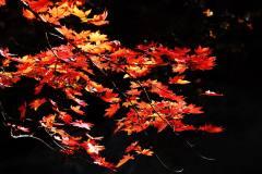 本溪老边沟的红叶