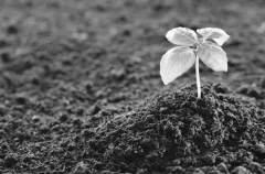 科学家评估气候变化对土壤生态系统的影响