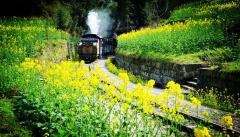 坐上火车去旅行
