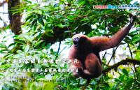【8月7日讲座预告】:中国国家级自然保护区巡礼 走进云南高黎贡山国家级自然保护区