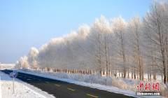 呼伦贝尔再现-40℃极寒 雾凇演绎冰雪童话
