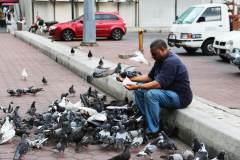 男人与鸽子