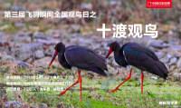 """【第三届""""飞羽瞬间""""全国观鸟日】十渡观鸟"""