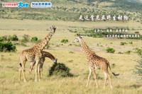 【大讲堂加场!】【4月29日周三】走近肯尼亚野生动物
