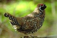 【中国国家地理科考志愿者项目】走进甘肃莲花山国家级自然保护区 探寻鸟类繁殖行为的奥秘