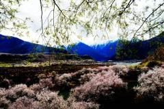 大峡谷的春天