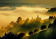 安徽池州:高山之上的金色交响
