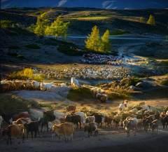 牧民轉場——秋季新疆行
