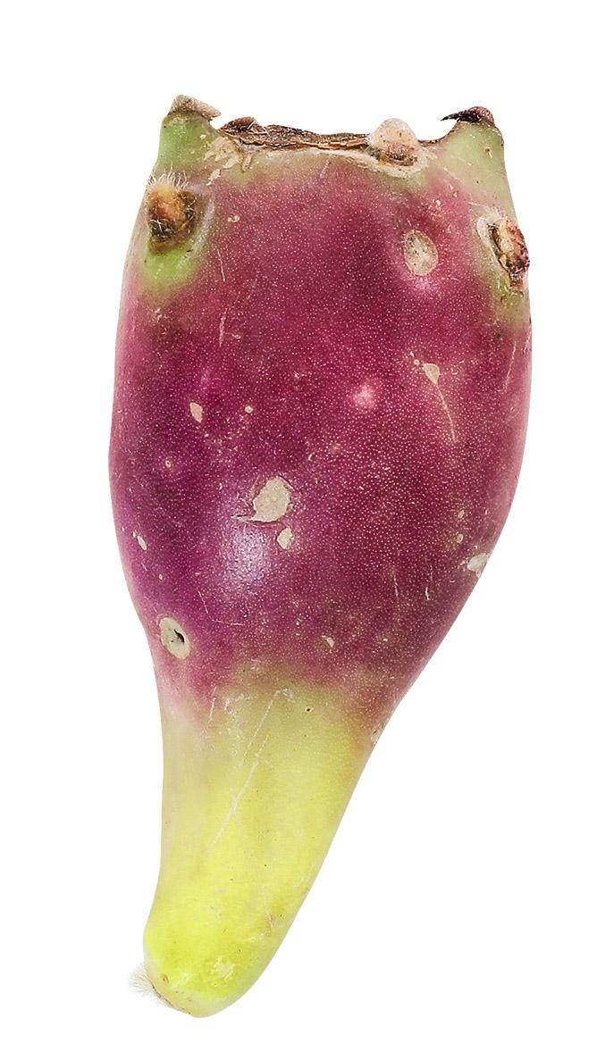 仙人掌果和火龙果_近年流行的热带水果 | 中国国家地理网