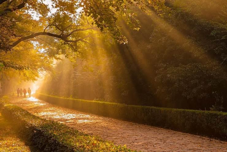 钟山风景区林荫道上的时光之韵